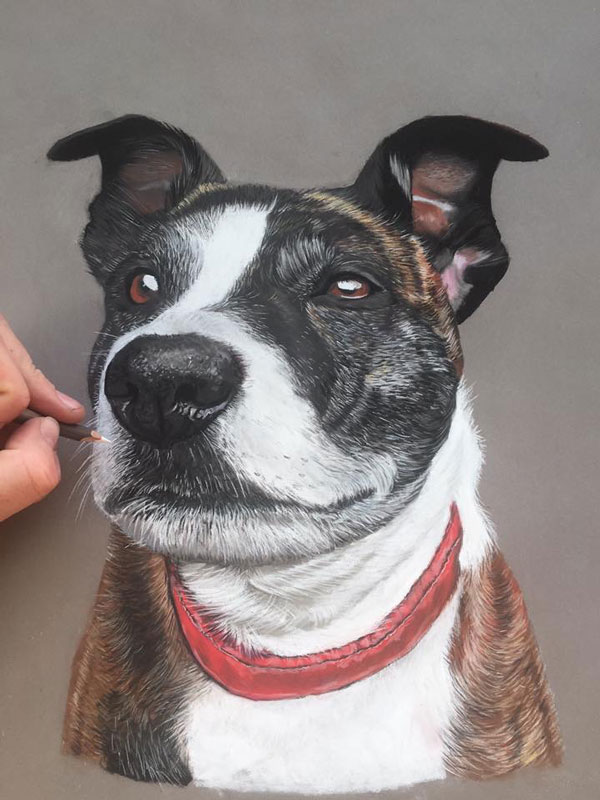 pet portrait in pastel of a dog called Hollie