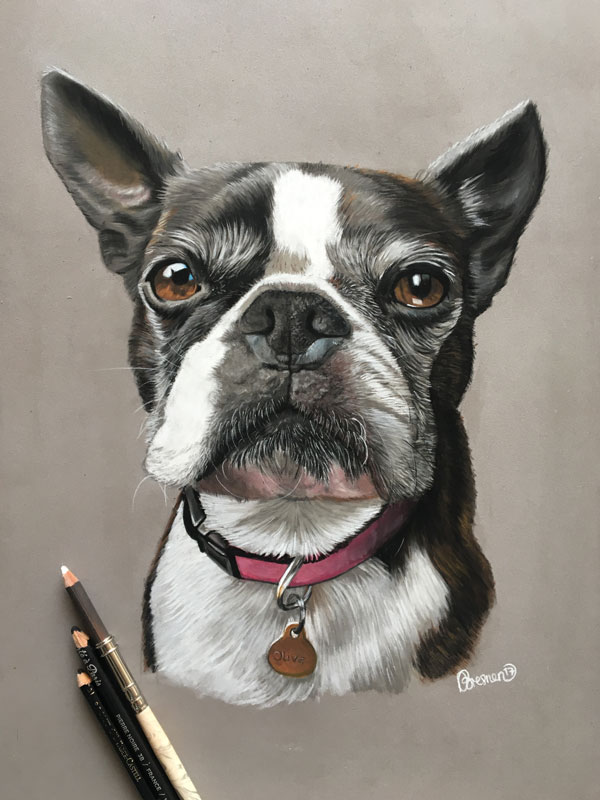 pet portrait of a dog called Olive
